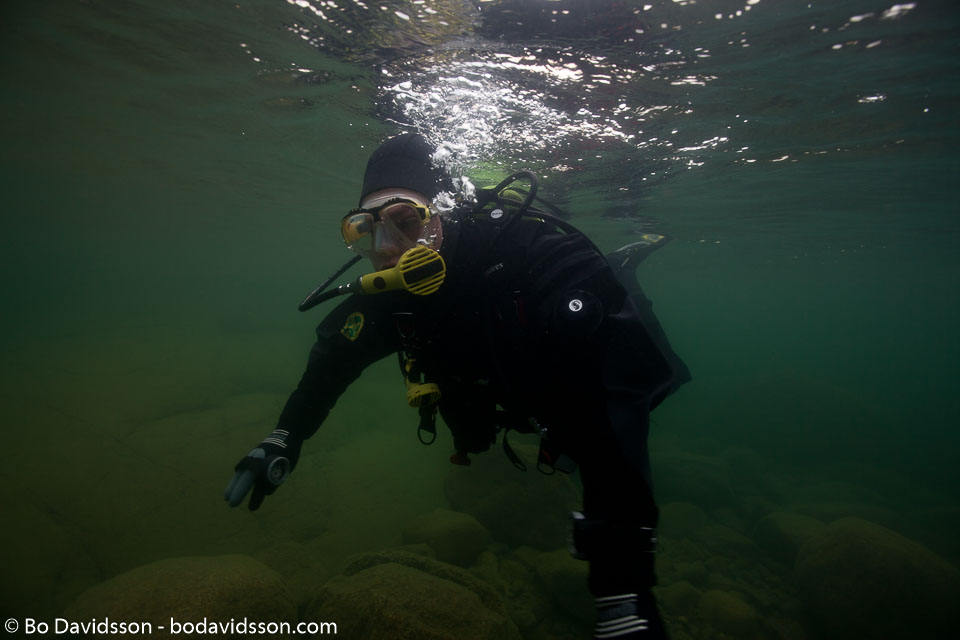 BD-100818-Nydalen-1572-Homo-sapiens.-Linnaeus.-1758-[Diver].jpg